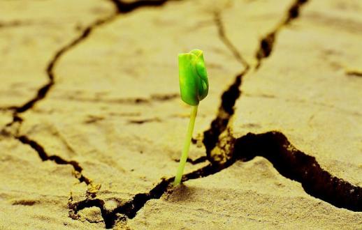 不久的将来或只有两类网站建设公司可以获得生存